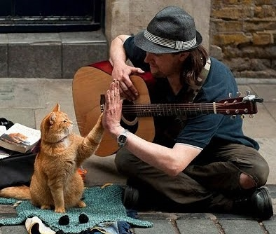 A Street Cat and a SadSong